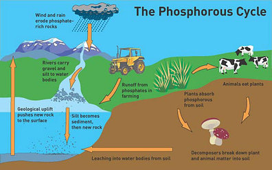 Crash Course: Nitrogen and Phosphorus Cycle Guided Viewing Worksheet